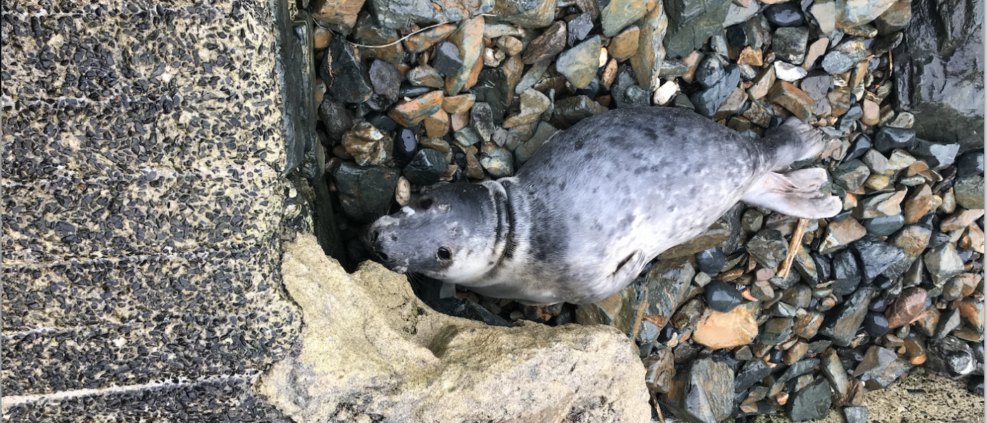 Seal Strandings